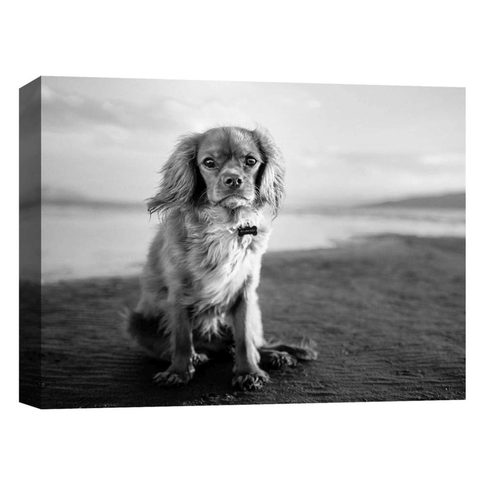 11 34 X 14 34 Puppy Posing Ii Decorative Wall Art Ptm Images