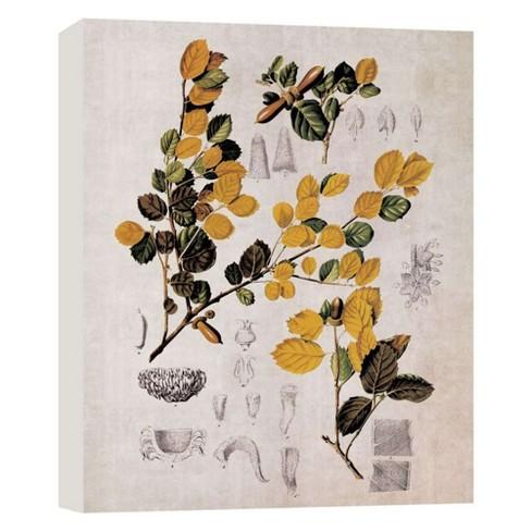 "Botany II Decorative Canvas Wall Art 11""x14"" - PTM Images - image 1 of 1"