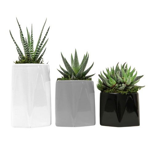 Puzzle Trio 3pk Living Succulents In Decorative Ceramic Containers - Livetrends Design - image 1 of 2