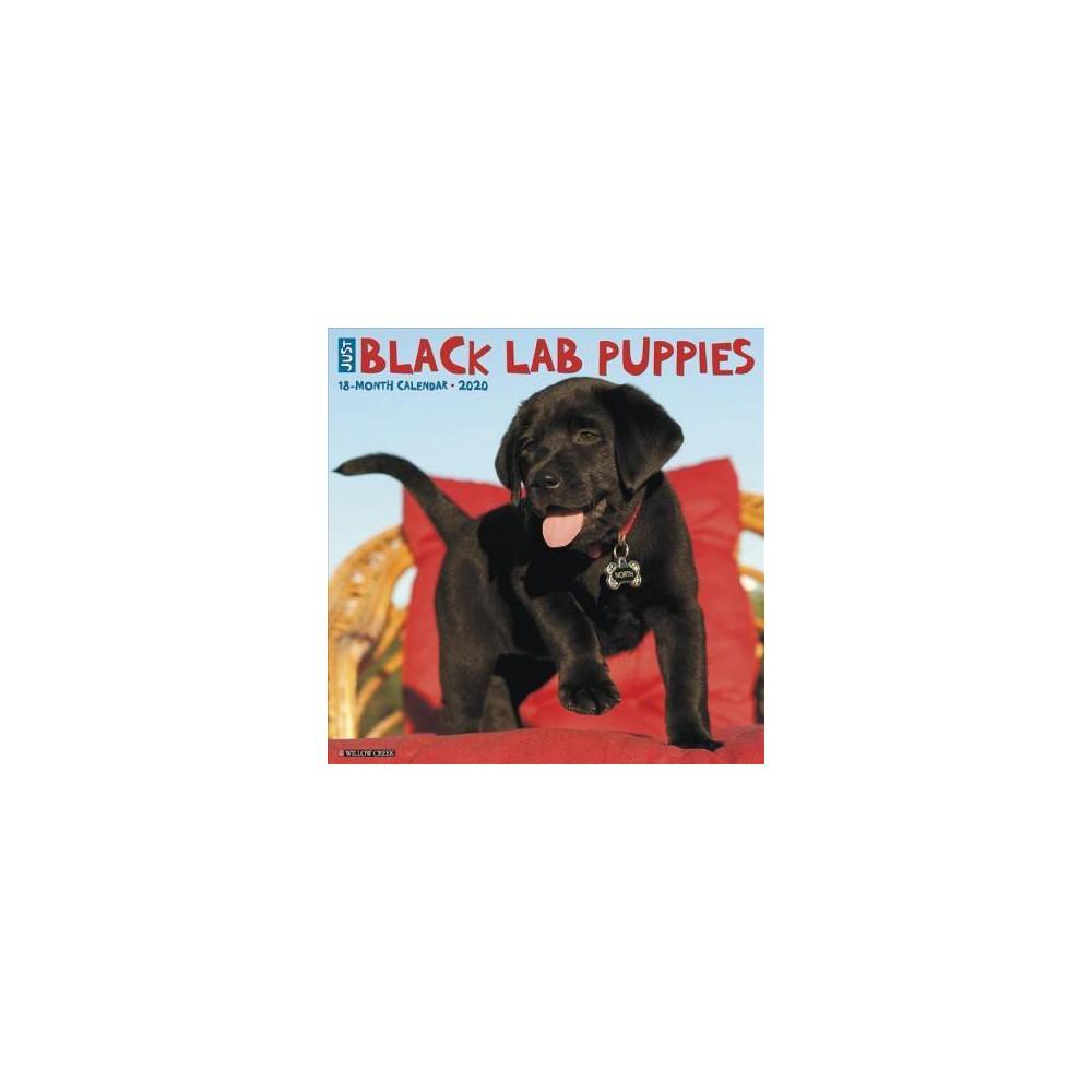 Just Black Lab Puppies 2020 Calendar - (Paperback)