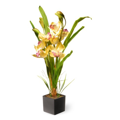 17 yellow orchid flowers national tree company target about this item mightylinksfo