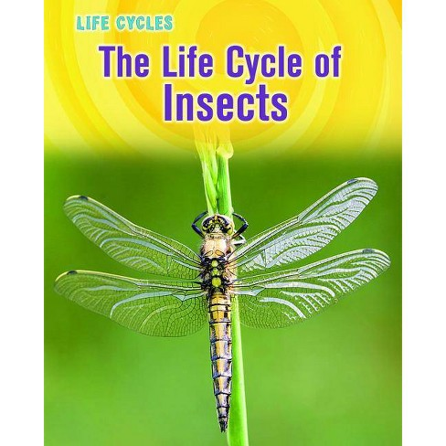 The Life Cycle of Insects - (Life Cycles (Heinemann Paperback)) by  Susan Heinrichs Gray (Paperback) - image 1 of 1