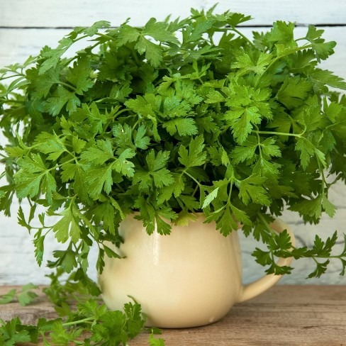 Burpee 6pc Herb Garden Good Grillin Collection - National Plant Network - image 1 of 3