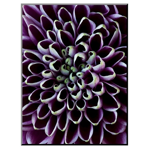 Close-up of Chrysanthemum Flower by Clive Nichols Photographic Print - image 1 of 2
