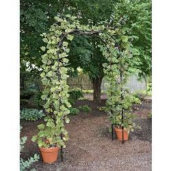 Titan Arch, Large Lightweight Metal Backyard Garden Arch For Climbing Plants - Gardener's Supply Company