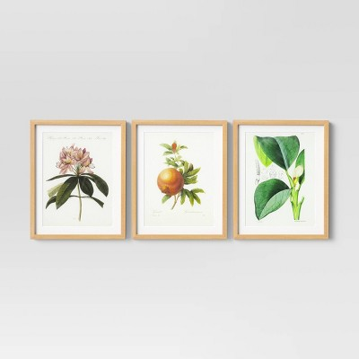 "Set of 3 16"" x 20"" Vintage Botanical Trio Framed Under Glass with Mat - Threshold™"