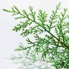 Large Pine Tree in Ceramic Pot - Threshold™ designed with Studio McGee - image 3 of 4