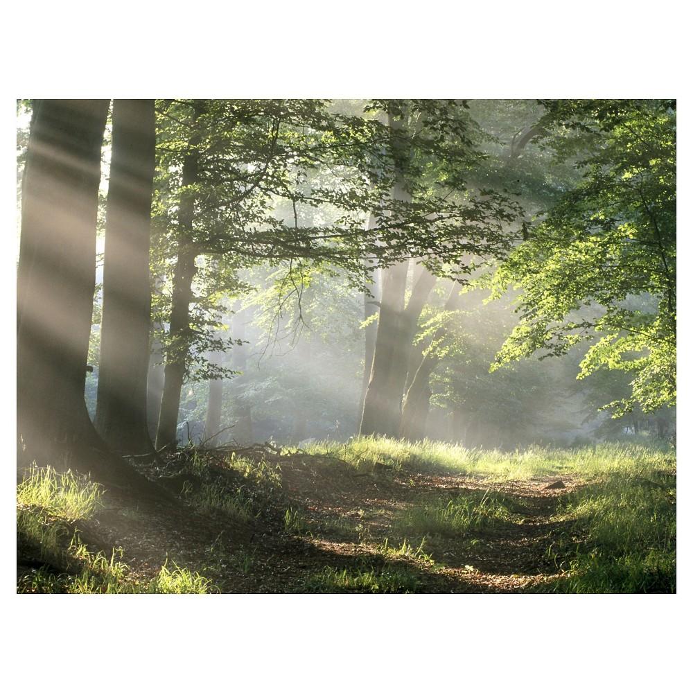 Art.com - Forest Path, Size: 24 x 32 Art Print, Green