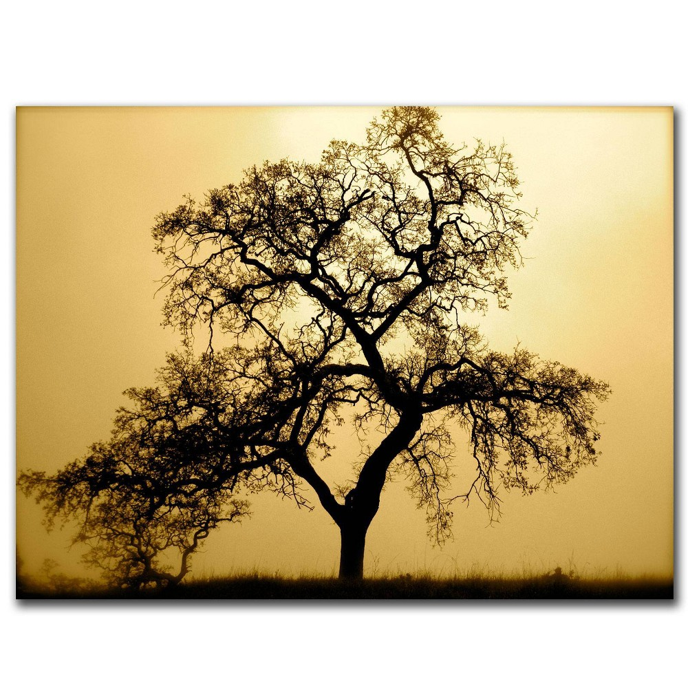 'Pacific Oak' by Colleen ProppeReady to Hang Canvas Wall Art, Sun Yellow