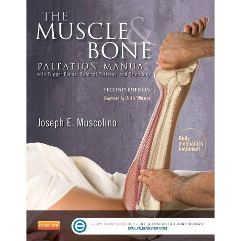 The Muscle and Bone Palpation Manual with Trigger Points, Referral Patterns and Stretching - 2 Edition - image 1 of 1