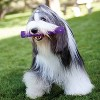 KONG Squeezz Stick Fetch Dog Toy - Purple - L - image 3 of 3