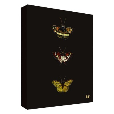 "11"" x 14"" Butterfly Portrait II Decorative Wall Art - PTM Images"