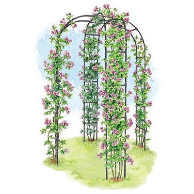 Extra Strong Lightweight Metal Titan Arbor for Climbing Flowers and Vegetables - Gardener's Supply Company