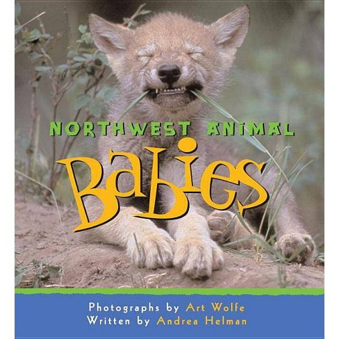Northwest Animal Babies - by  Andrea Helman (Paperback) - image 1 of 1