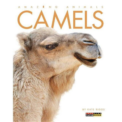 Camels - (Amazing Animals (Creative Education Paperback)) by  Kate Riggs (Paperback) - image 1 of 1