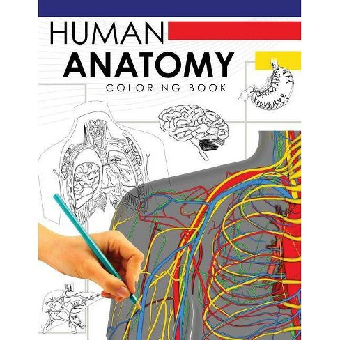 Human Anatomy Coloring Book - by Dr William a Douglas (Paperback)