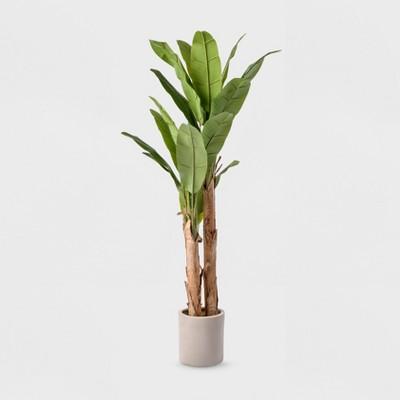 6ft Banana Tree in White Cement Pot - Lloyd & Hannah