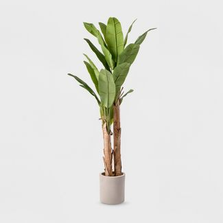 6ft Banana Tree in White Cement Pot - Lloyd & Hannah