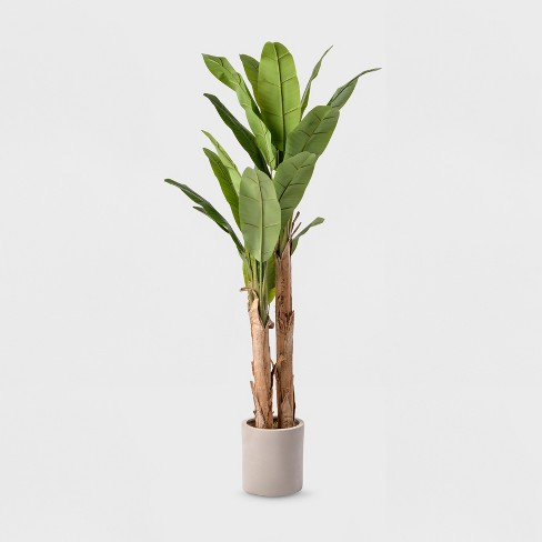6ft Banana Tree In White Cement Pot