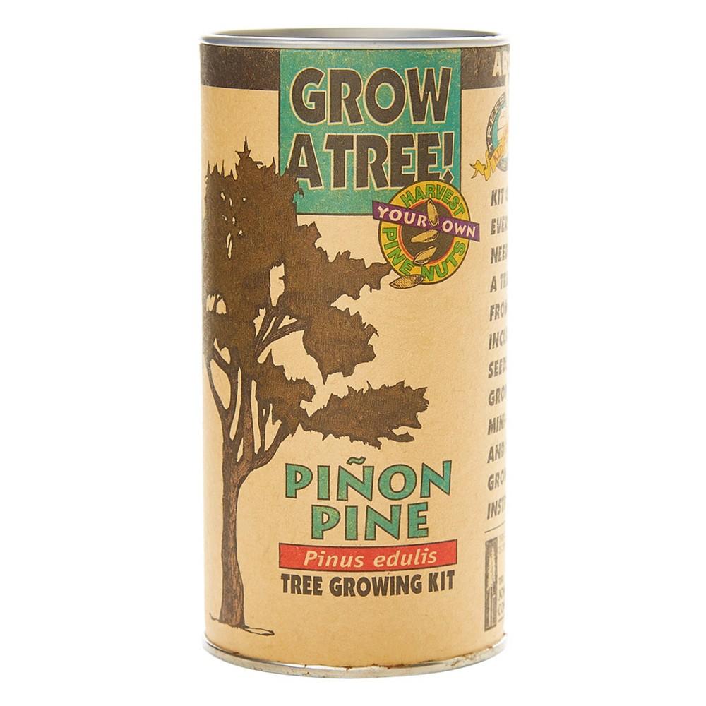 Image of Pinon Pine Seed Grow Kit - The Jonsteen Company