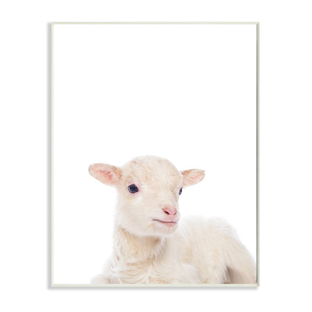 "Image of ""10""""x0.5""""x15"""" Baby Lamb Studio Photo Wall Plaque Art - Stupell Industries"""