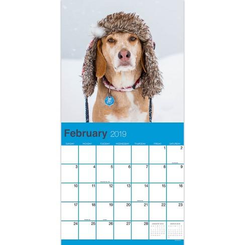 February 2019 Calendars Dog 2019 Wall Calendar Dog Selfies   TF Publishing : Target