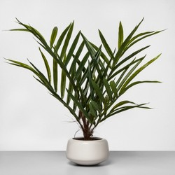 "27"" x 16"" Artificial Potted Palm Green/White - Project 62™"