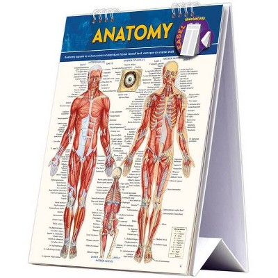 Anatomy Easel Book - by  Vincent Perez (Hardcover)