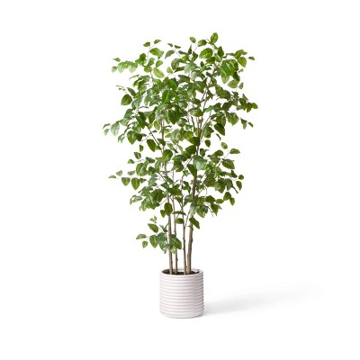 7ft Faux Natal Mahogany Tree in Pot - Hilton Carter for Target