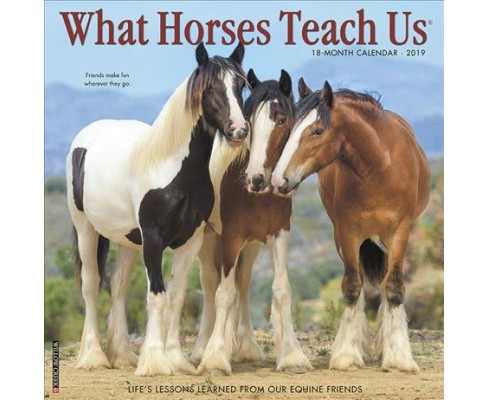 What Horses Teach Us 2019 Calendar -  (Paperback) - image 1 of 1