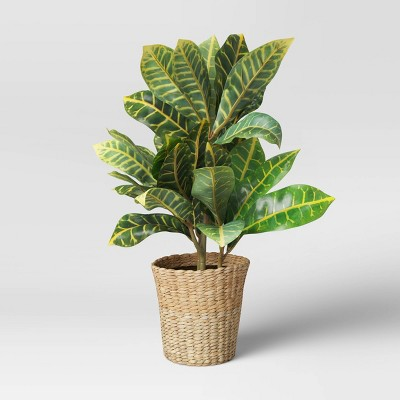 """22"""" x 16"""" Artificial Croton Plant in Basket - Threshold™"""
