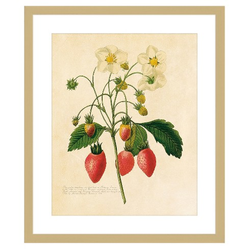 """18"""" x 22"""" Matted to 2"""" Vintage Fruit Plant Ii Picture Framed Antique Gold - PTM Images - image 1 of 1"""