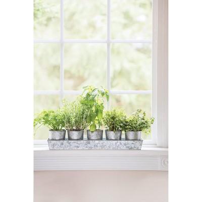 Galvanized Herb Planters with Rectangular Tray - Gardener's Supply Company