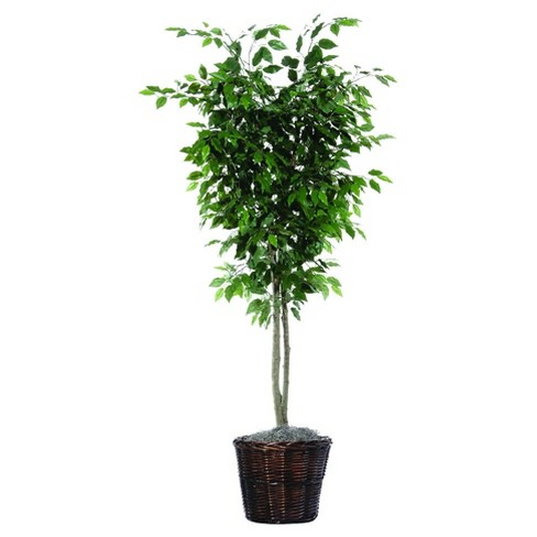 Artificial Ficus Deluxe (6ft) Green - Vickerman® - image 1 of 1