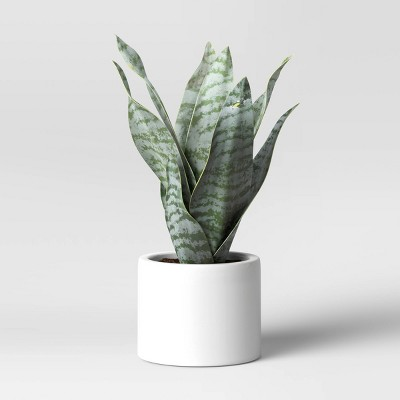 "8"" x 5"" Artificial Snake Plant in Pot - Project 62™"