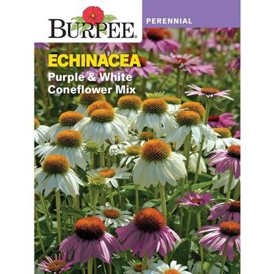 BURPEE Echinacea Purple & White Coneflower Mix