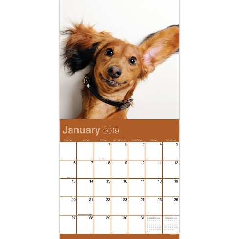 2019 Wall Calendar Dog Selfies Tf Publishing Target