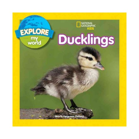 Explore My World: Ducklings - by  Marfe Ferguson Delano (Paperback) - image 1 of 1