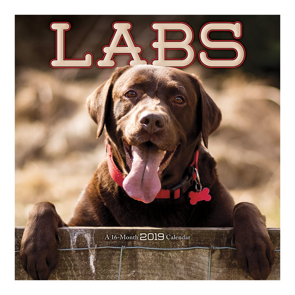 2019 Wall Calendar Labs - Trends International, Multi-Colored