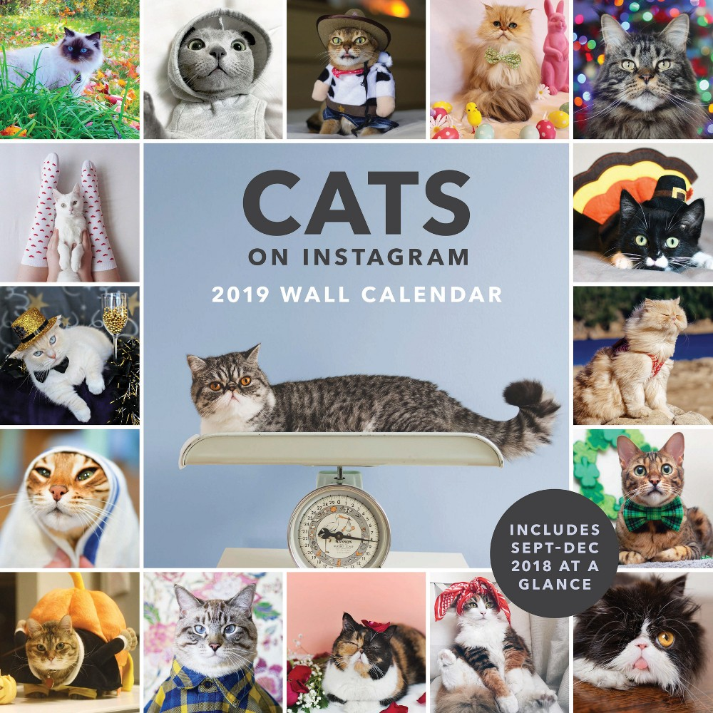 2019 Wall Calendar Cats on Instagram, Multi-Colored