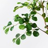 """72"""" Artificial Ficus Tree - Threshold™ designed with Studio McGee - image 3 of 4"""