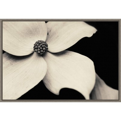 "23"" x 16"" Dogwood Flower by Gary Horsfall Framed Canvas Wall Art - Amanti Art"