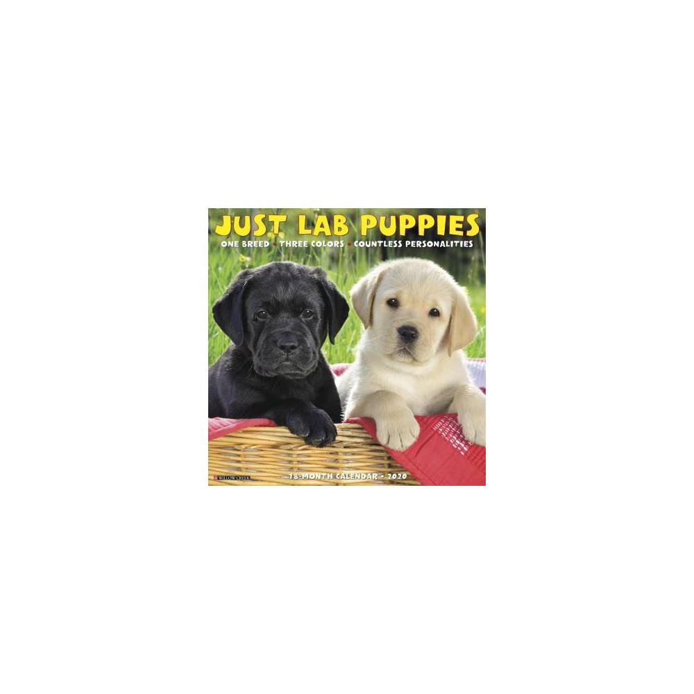 Just Lab Puppies 2020 Calendar - (Paperback)
