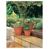 Ariana Planter with Self Watering Grid - Bloem - image 2 of 4