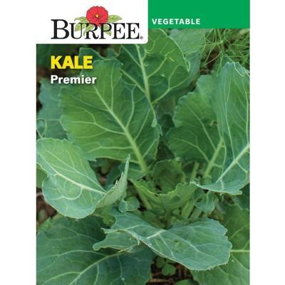Burpee Kale Premier