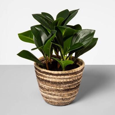 "9"" x 7"" Artificial Greenery Plant in Corn Husk Basket - Opalhouse™"