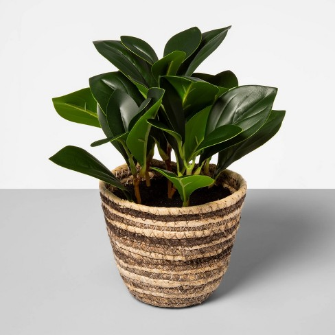"""9"""" x 7"""" Artificial Greenery Plant in Corn Husk Basket - Opalhouse™ - image 1 of 1"""