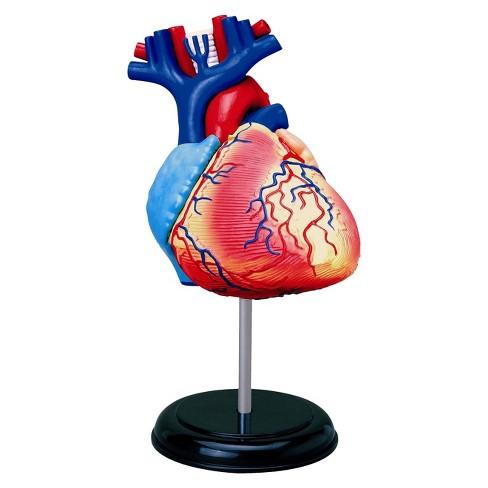 "John N. Hansen Human Heart Anatomy Model-3.0"" 31pc - image 1 of 2"