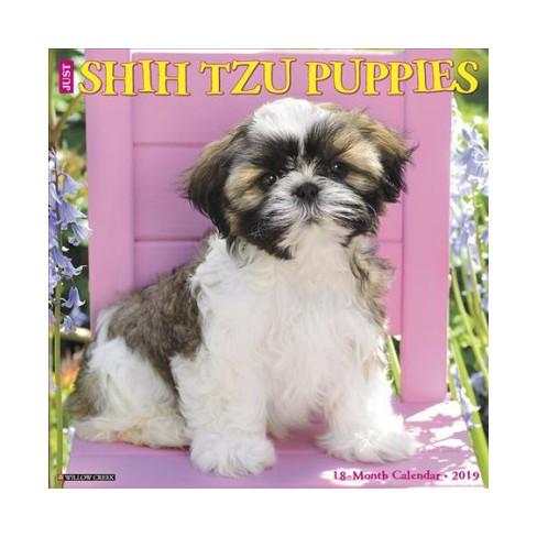 Just Shih Tzu Puppies 2019 Calendar Paperback Target