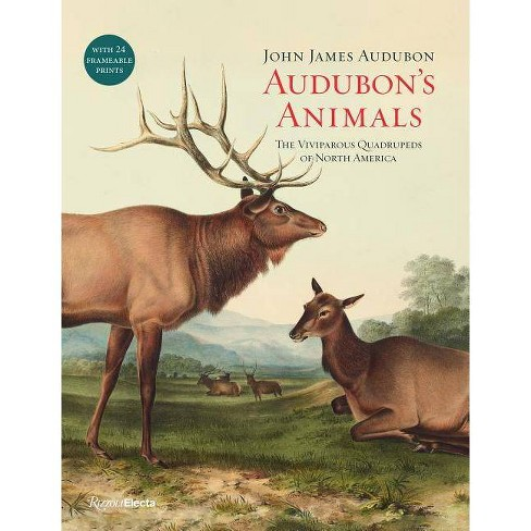 Audubon's Animals - by  John James Audubon (Hardcover) - image 1 of 1